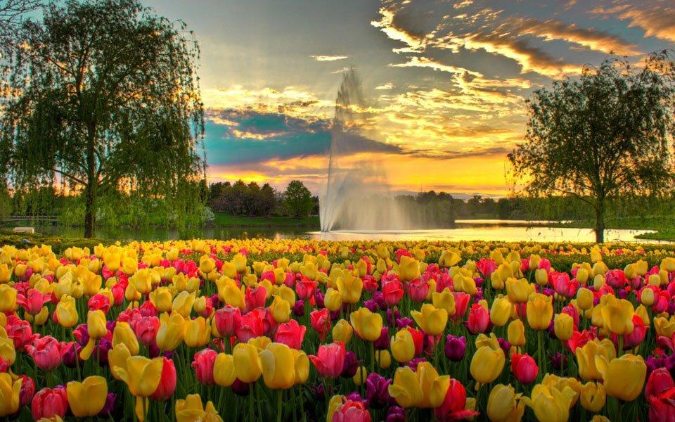 حديقة شيكاغو النباتية   Chicago Botanic Garden
